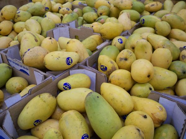 Kidney Mangoes